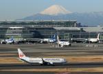 tuckerさんが、羽田空港で撮影した日本航空 737-846の航空フォト(写真)