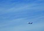 タミーさんが、中部国際空港で撮影したタイ国際航空 A380-841の航空フォト(写真)