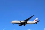 ハム太郎さんが、成田国際空港で撮影した日本航空 787-846の航空フォト(写真)
