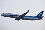 ジャコビさんが、関西国際空港で撮影した全日空 737-881の航空フォト(写真)