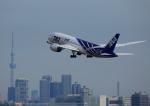 タミーさんが、羽田空港で撮影した全日空 787-8 Dreamlinerの航空フォト(写真)