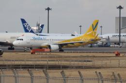 Koenig117さんが、成田国際空港で撮影したバニラエア A320-214の航空フォト(写真)