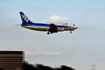 NIKKOREX Fさんが、成田国際空港で撮影したANAウイングス 737-54Kの航空フォト(写真)