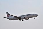 うめたろうさんが、伊丹空港で撮影した日本航空 737-846の航空フォト(写真)