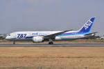 md11jbirdさんが、伊丹空港で撮影した全日空 787-881の航空フォト(写真)