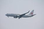 フレッシュマリオさんが、羽田空港で撮影した日本航空 737-846の航空フォト(写真)