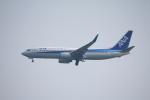 フレッシュマリオさんが、羽田空港で撮影した全日空 737-881の航空フォト(写真)