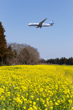 GOOSEMAN777さんが、成田国際空港で撮影した全日空 767-381Fの航空フォト(写真)