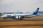 KAZ_YYZさんが、伊丹空港で撮影した全日空 787-881の航空フォト(写真)
