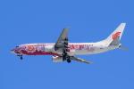 noriphotoさんが、新千歳空港で撮影した中国国際航空 737-86Nの航空フォト(写真)