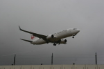 いっとくさんが、成田国際空港で撮影した日本航空 737-846の航空フォト(写真)