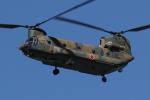 isiさんが、厚木飛行場で撮影した陸上自衛隊 CH-47Jの航空フォト(写真)