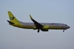 よしポンさんが、成田国際空港で撮影したジンエアー 737-8B5の航空フォト(写真)