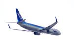 tkosadaさんが、羽田空港で撮影した全日空 737-881の航空フォト(写真)