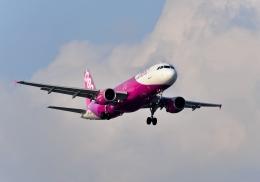 バーダーさんさんが、新千歳空港で撮影したピーチ A320-214の航空フォト(写真)