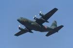 TAISEIさんが、岐阜基地で撮影した航空自衛隊 C-130H Herculesの航空フォト(写真)