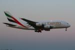 tomoMTさんが、成田国際空港で撮影したエミレーツ航空 A380-861の航空フォト(写真)