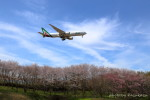 かずかずさんが、成田国際空港で撮影したアリタリア航空 777-243/ERの航空フォト(写真)