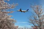 かずかずさんが、成田国際空港で撮影したスカンジナビア航空 A340-313Xの航空フォト(写真)