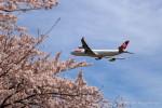かずかずさんが、成田国際空港で撮影したスイスインターナショナルエアラインズ A340-313Xの航空フォト(写真)
