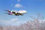nh747dさんが、成田国際空港で撮影したタイ国際航空 A380-841の航空フォト(写真)