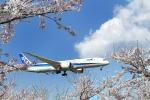 nh747dさんが、成田国際空港で撮影した全日空 787-9の航空フォト(写真)