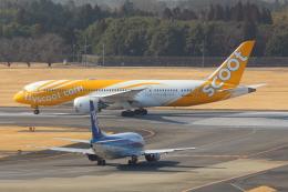 Koenig117さんが、成田国際空港で撮影したスクート 787-8 Dreamlinerの航空フォト(写真)
