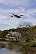 ポン太さんが、成田国際空港で撮影したチャイナエアライン 747-409F/SCDの航空フォト(写真)
