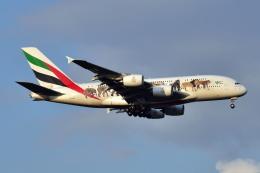 Timothyさんが、成田国際空港で撮影したエミレーツ航空 A380-861の航空フォト(写真)