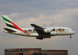 タミーさんが、成田国際空港で撮影したエミレーツ航空 A380-861の航空フォト(写真)