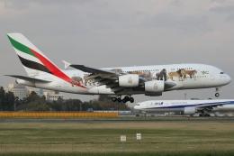 Wings Flapさんが、成田国際空港で撮影したエミレーツ航空 A380-861の航空フォト(写真)