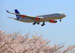 タミーさんが、成田国際空港で撮影したスカンジナビア航空 A340-313Xの航空フォト(写真)