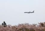 タミーさんが、成田国際空港で撮影したエティハド航空 787-9の航空フォト(写真)