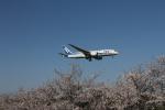 サトヤンさんが、成田国際空港で撮影した全日空 787-881の航空フォト(写真)