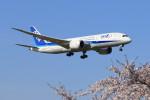 オポッサムさんが、成田国際空港で撮影した全日空 787-881の航空フォト(写真)