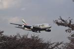 あくせるさんが、成田国際空港で撮影したエミレーツ航空 A380-861の航空フォト(写真)