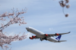 poppoya-makochanさんが、成田国際空港で撮影したスカンジナビア航空 A340-313Xの航空フォト(写真)