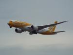 PW4090さんが、関西国際空港で撮影したスクート 787-8 Dreamlinerの航空フォト(写真)