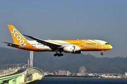 we love kixさんが、関西国際空港で撮影したスクート 787-8 Dreamlinerの航空フォト(写真)