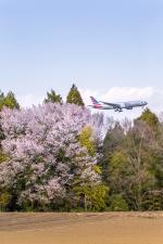mameshibaさんが、成田国際空港で撮影したアメリカン航空 777-223/ERの航空フォト(写真)