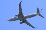 多楽さんが、成田国際空港で撮影した全日空 737-881の航空フォト(写真)