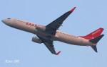 RINA-200さんが、関西国際空港で撮影したイースター航空 737-8Q8の航空フォト(写真)