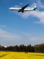 Mame @ TYOさんが、成田国際空港で撮影した大韓航空 A330-323Xの航空フォト(写真)
