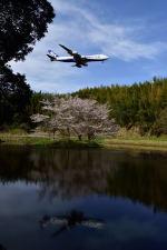 ポン太さんが、成田国際空港で撮影した日本貨物航空 747-8KZF/SCDの航空フォト(写真)