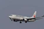 くーぺいさんが、新千歳空港で撮影した日本航空 737-846の航空フォト(写真)
