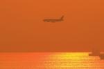 Rundy's Airgraphyさんが、中部国際空港で撮影したタイ国際航空 787-8 Dreamlinerの航空フォト(写真)
