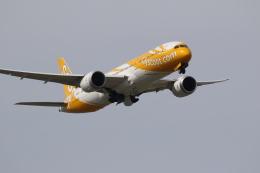 airdrugさんが、成田国際空港で撮影したスクート 777-212/ERの航空フォト(写真)