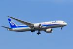 GOOSEMAN777さんが、羽田空港で撮影した全日空 787-9の航空フォト(写真)