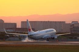 リクパパさんが、伊丹空港で撮影した日本航空 737-846の航空フォト(写真)