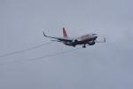 chinbariさんが、成田国際空港で撮影したチェジュ航空 737-8BKの航空フォト(写真)